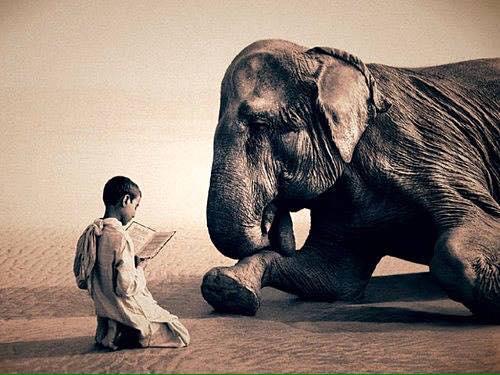 bo-reading-book-to-elephant